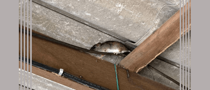 Effective Rodent Control Services