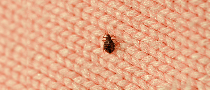 Bed Bug Control Macquarie